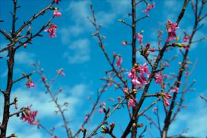 心が春でいるのはメンタルヘルスが重要です