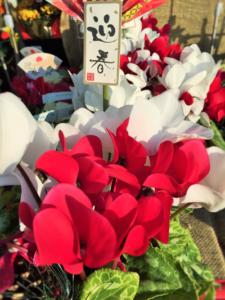 タニカワ久美子年末挨拶